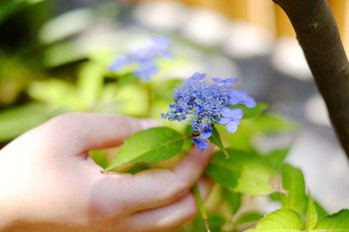 樹木の役割・植栽の大切さ